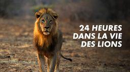 24 heures dans la vie des lions