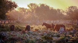 La harde sauvage : Libres chevaux de Sardaigne