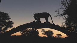 Ma vie de léopard