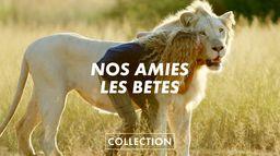 Collection Nos amies les bêtes