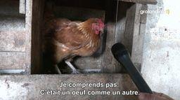 La poule arrêtée - Groland - CANAL+
