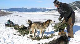 Avec mes chiens : l'odyssée sauvage de Nicolas Vanier