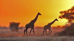 L'impitoyable Serengeti