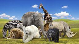 Sauvés de l'extinction