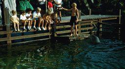 Flipper, aventures en Floride