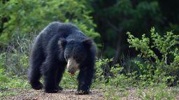 Sur les traces de l'ours mystère