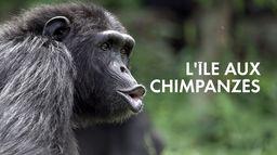 L'île aux chimpanzés