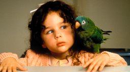 Paulie, le perroquet qui parlait trop
