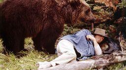 Le roi des grizzlys
