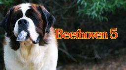 Beethoven, chasseur de trésor