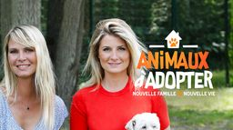 Animaux à adopter