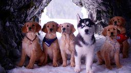 Les copains des neiges