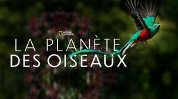 La planète des oiseaux