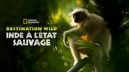 Destination Wild : Inde à l'état sauvage