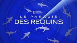 Le paradis des requins