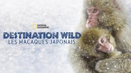 Destination Wild : Les macaques japonais