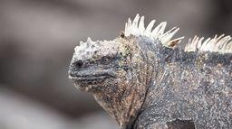 Galápagos, l'archipel sauvage
