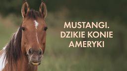 Mustangi. Dzikie konie Ameryki