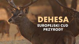 Dehesa - europejski cud przyrody