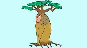 Le baobabouin