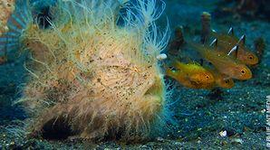 Survie sous l'océan
