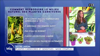 Plantes carnivores et sensitives : mode d'emploi !