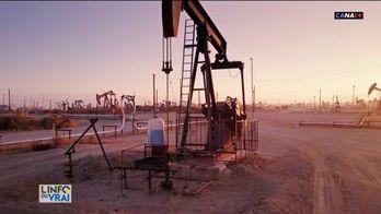 La nature reprend ses droits et le prix du pétrole dégringole