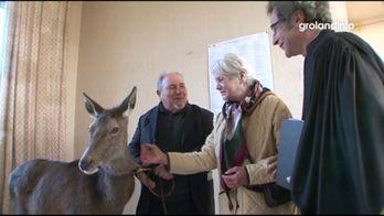 Bambi - Groland - CANAL+
