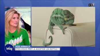 Etes-vous prêt à adopter un reptile ?