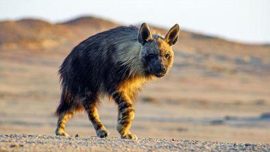 Skeleton Coast : les reines du Namib