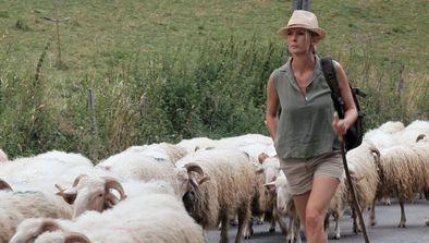 L'ascension estivale des moutons