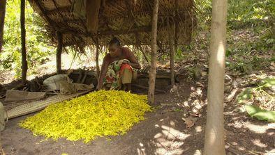 L'ylang-ylang des Comores