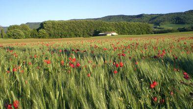 Provence, magie des couleurs