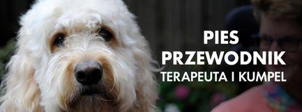 Pies przewodnik - terapeuta i kumpel