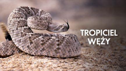 Tropiciel węży