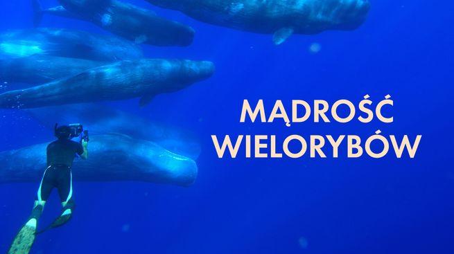 Mądrość wielorybów