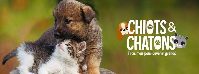 Chiots & chatons, 3 mois pour devenir grand