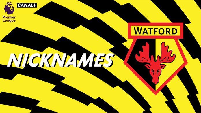 "Les ""Hornets"" de Watford"
