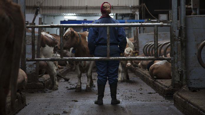 Mjólk, la guerre du lait