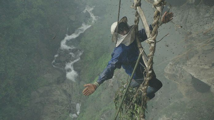 Défoncés au miel hallucinogène népalais
