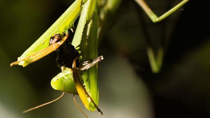Le règne des insectes