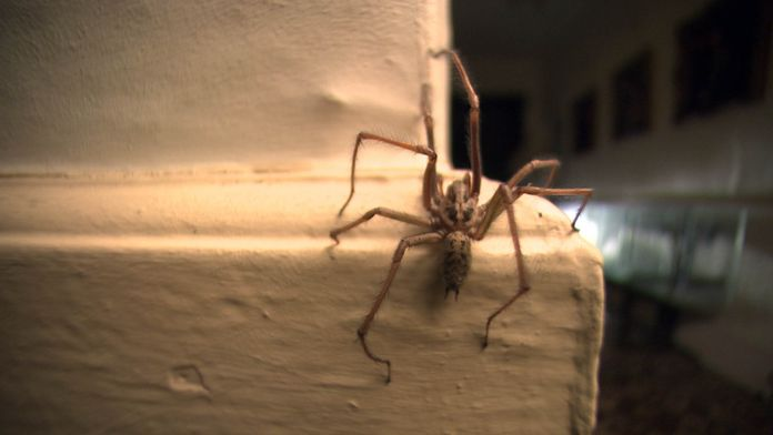 Nos voisines les araignées