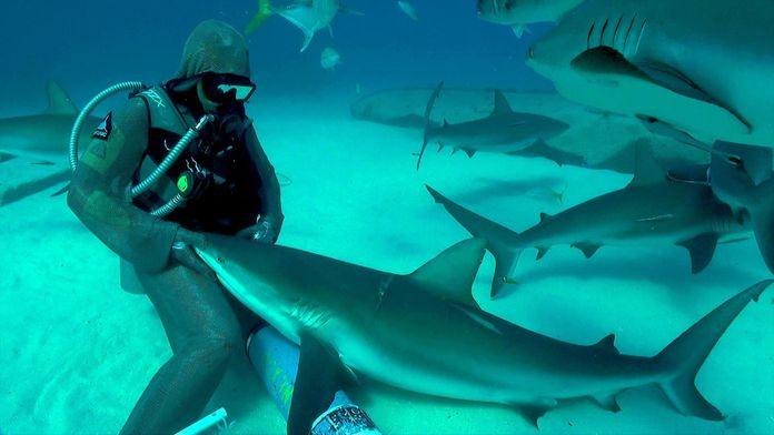 Top 10 des requins les plus extraordinaires