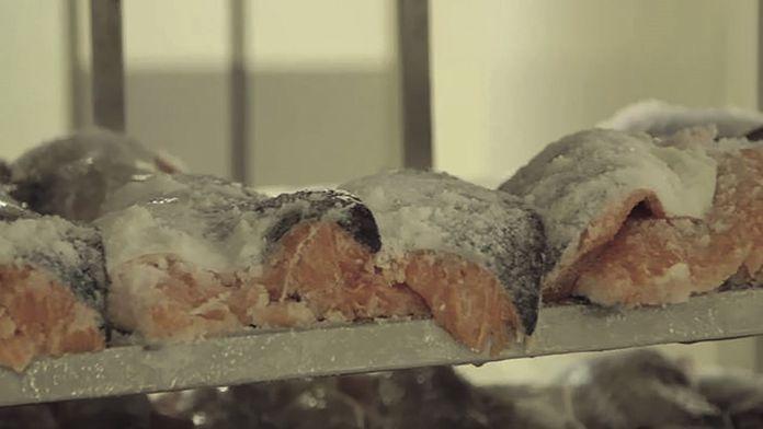 Le saumon, un remède à la crise alimentaire ?