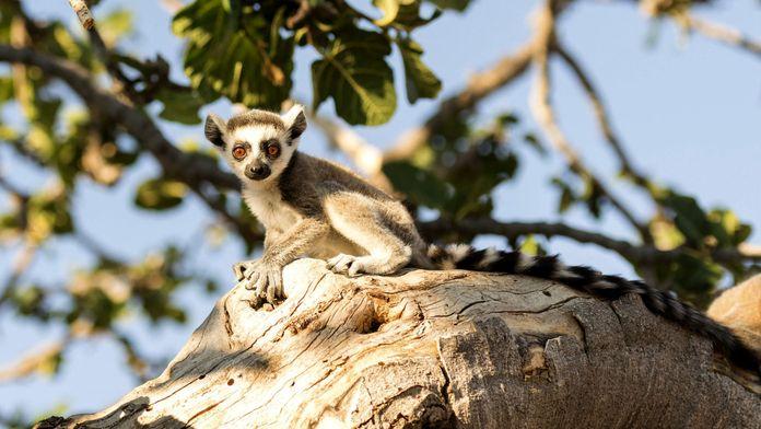 Madagascar: la nature enchantée
