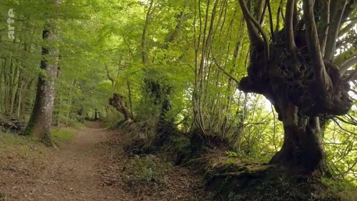Trognes : Les arbres aux mille visages