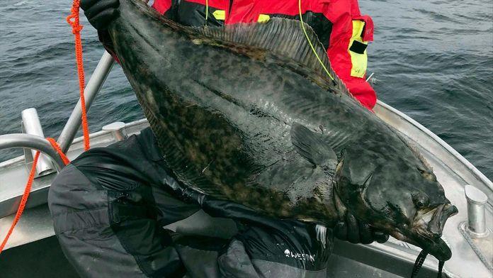 Pêches miraculeuses à Vesteralen