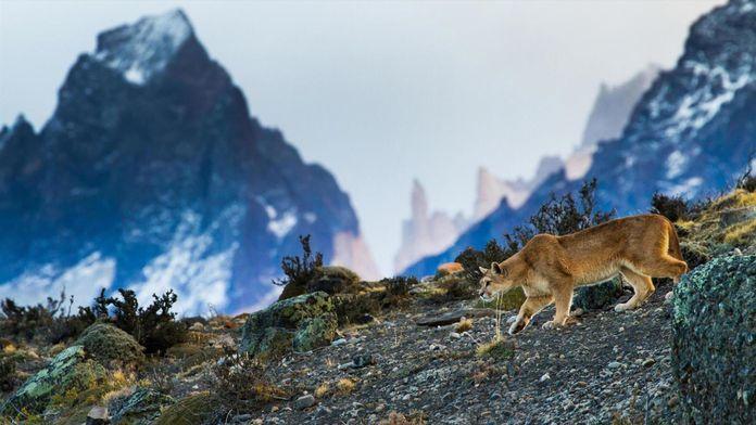 Dans les montagnes sauvages des Andes