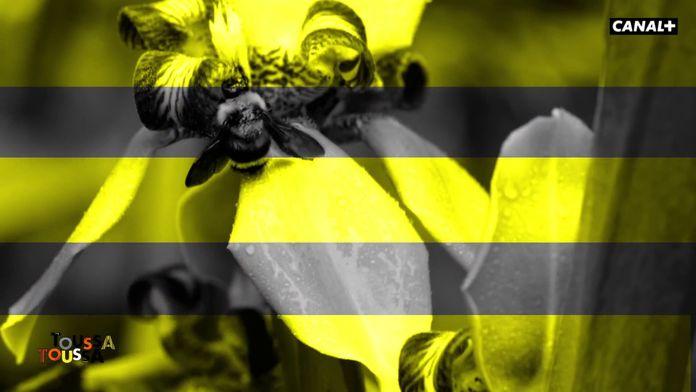 La disparition des abeilles et la biodiversité