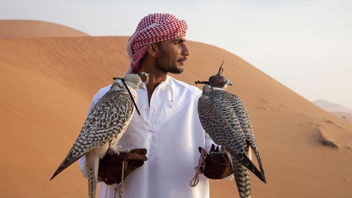 Arabie sauvage